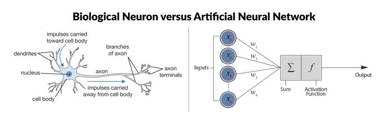Biological vs Artificial Neural Network